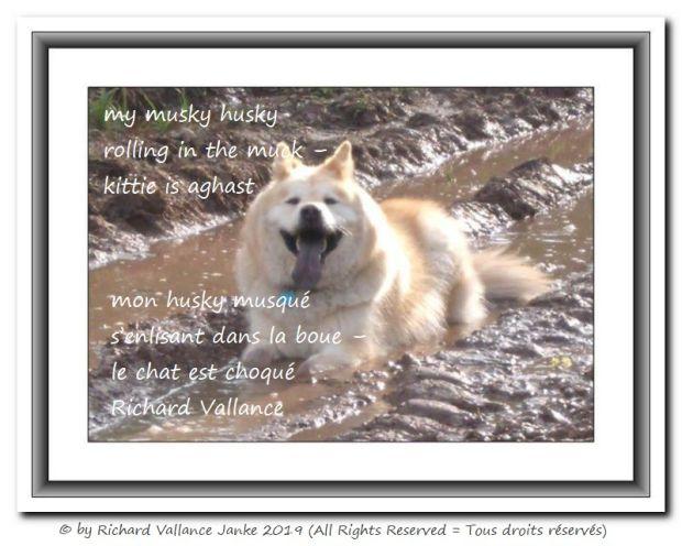 husky in the mud 620