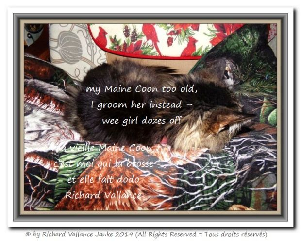 old Maine Coon 620