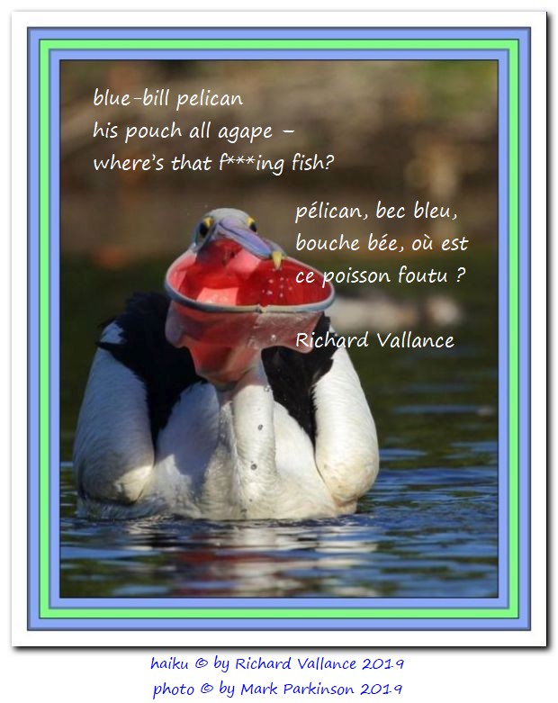 pelican haiku mark parkinson