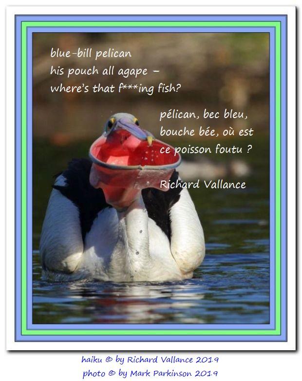 pelican haiku mark parkinson