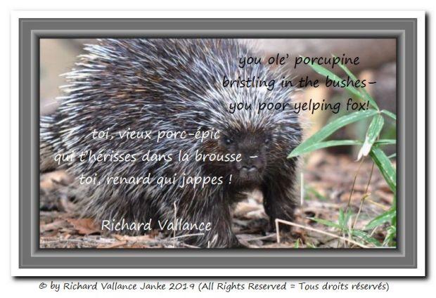 porcupine haiku 620