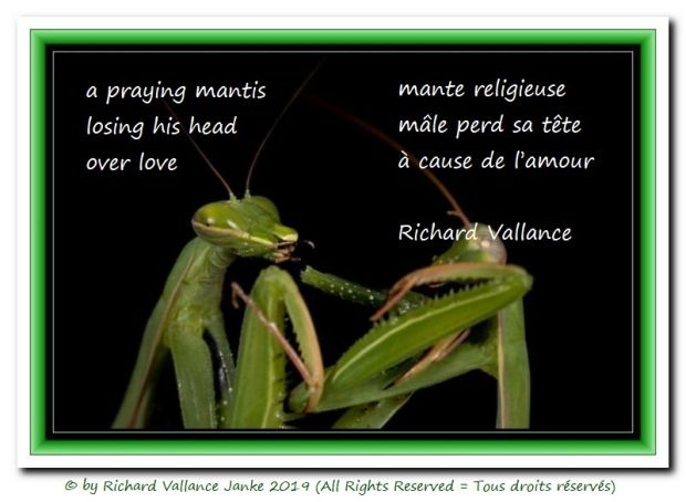 praying mantis haiku 620