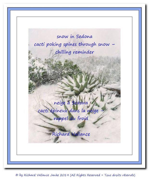 Sedona snow cactus 620
