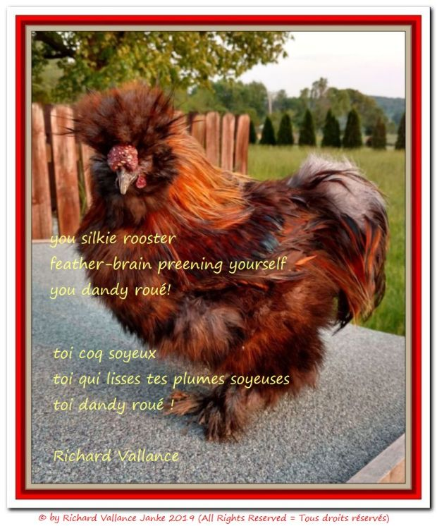 silkie partridge rooster haiku 620
