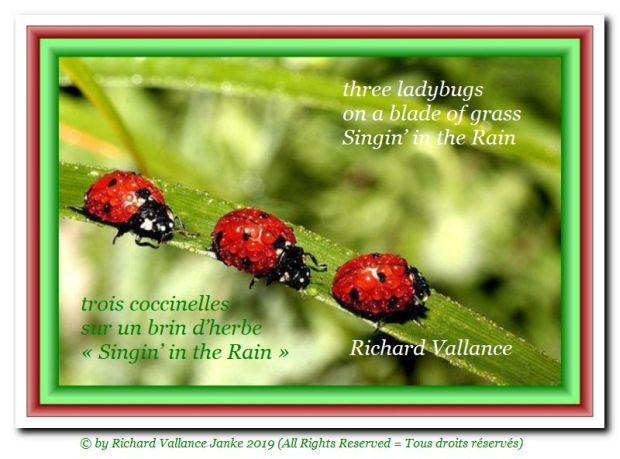 three ladybugs 620