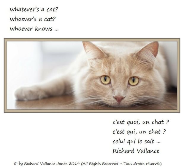 whatever's a cat haiku c'est quoi, un chat 620