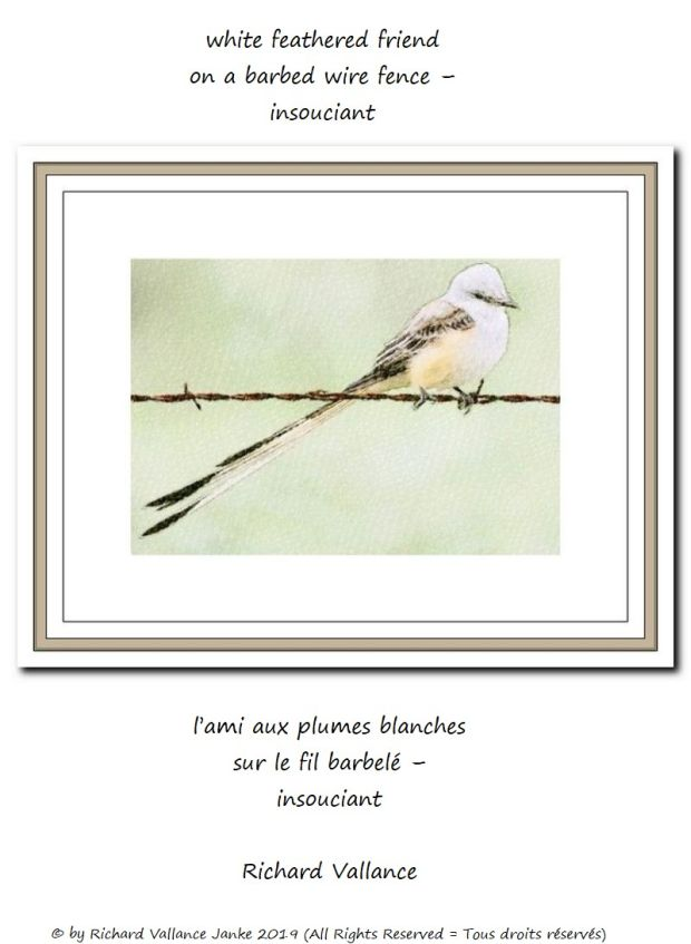 white bird on barbed wire 620