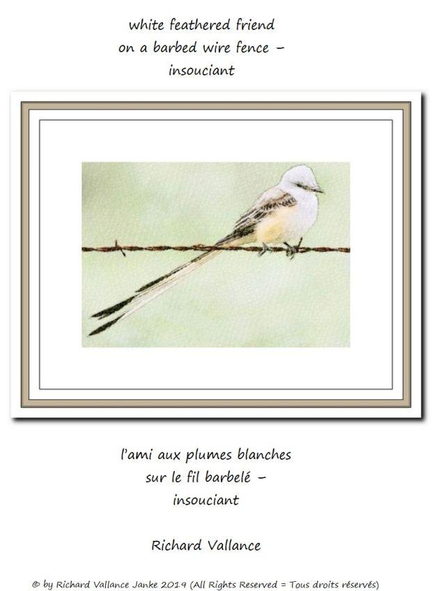 white bird on barbed wire 620