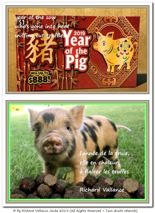 year of the sow 620