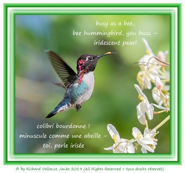 bee hummingbird 620