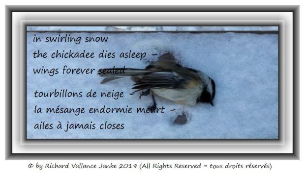 chickadee dies 620