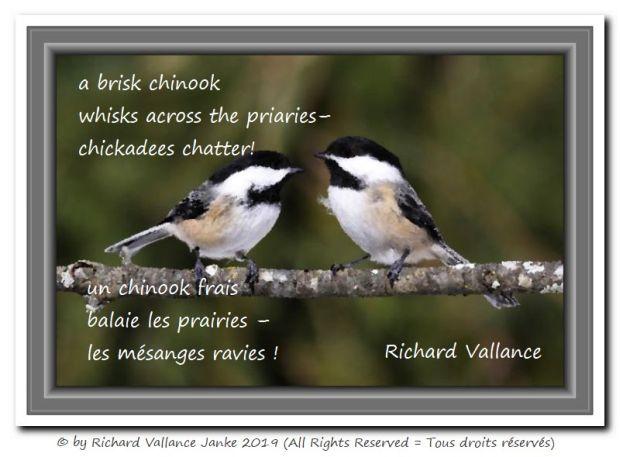 chickadees rejoice 620