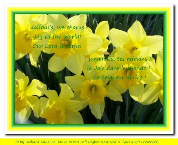 daffodils we chorus 620