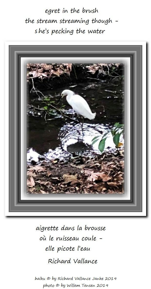 egret in the brush