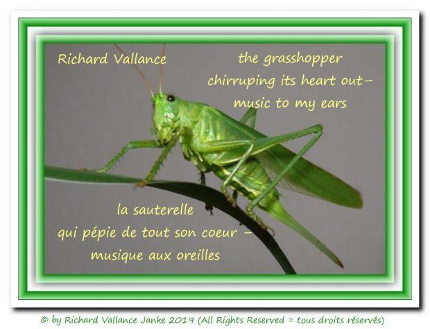 grasshopper haiku 620