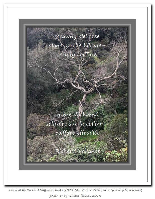 scrawny tree haiku 620