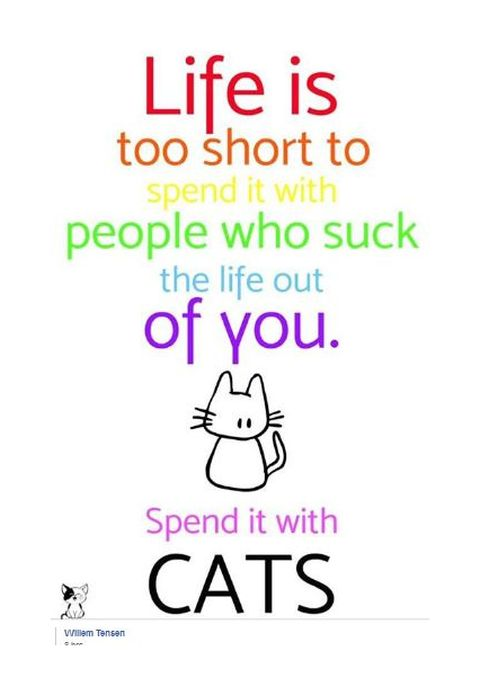 spend life with cats