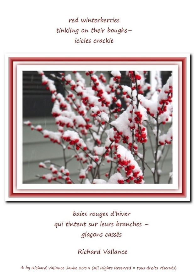winterberries haiku 620