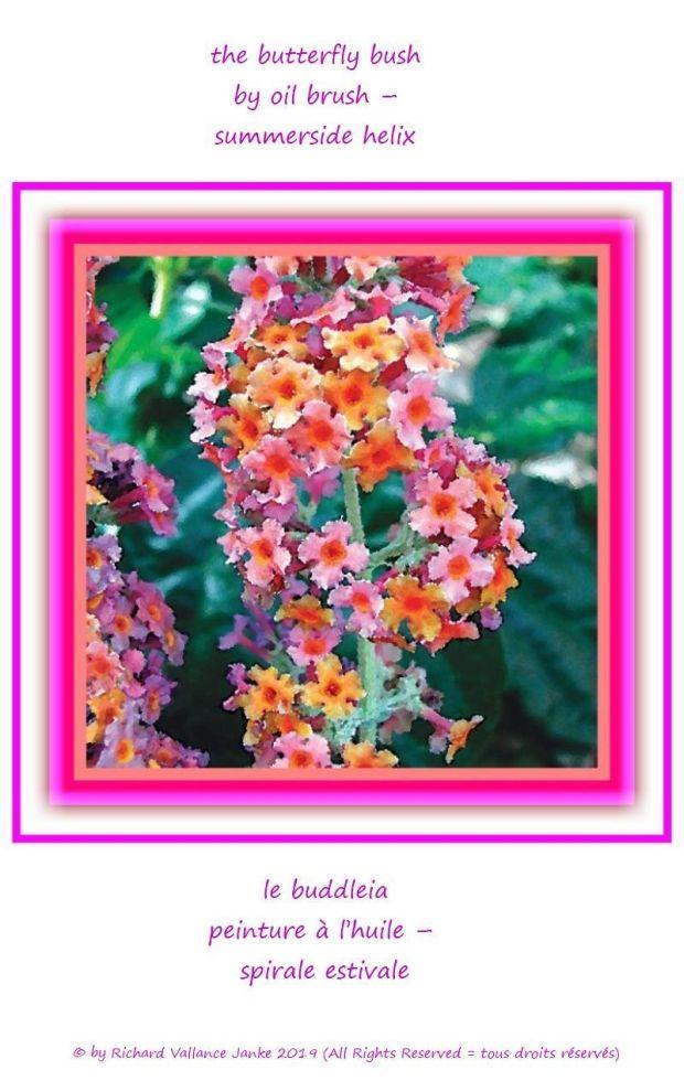 butterfly bush helix 620