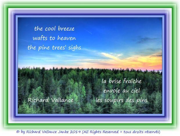 cool breeze pines 620