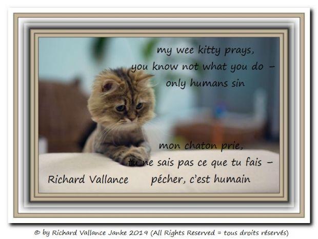 kitty in prayer 620