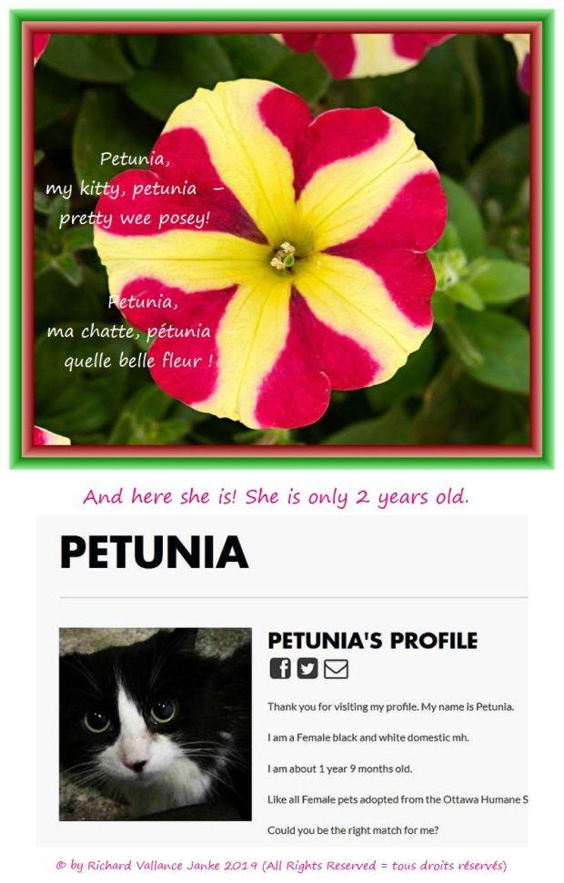 Petunia 620