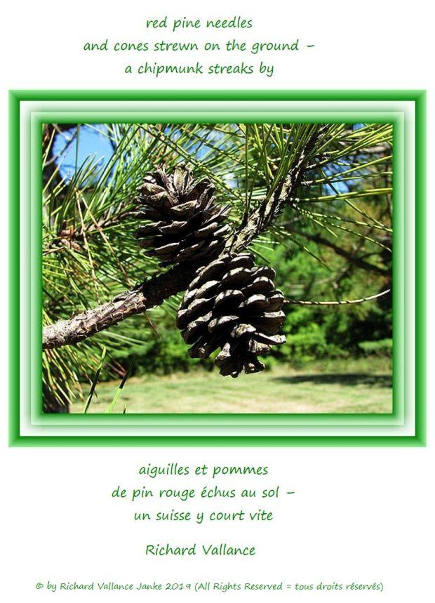 red pine cones 620