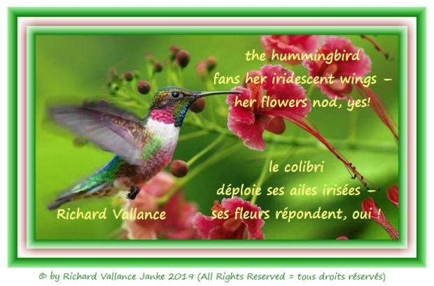 the hummingbird 620