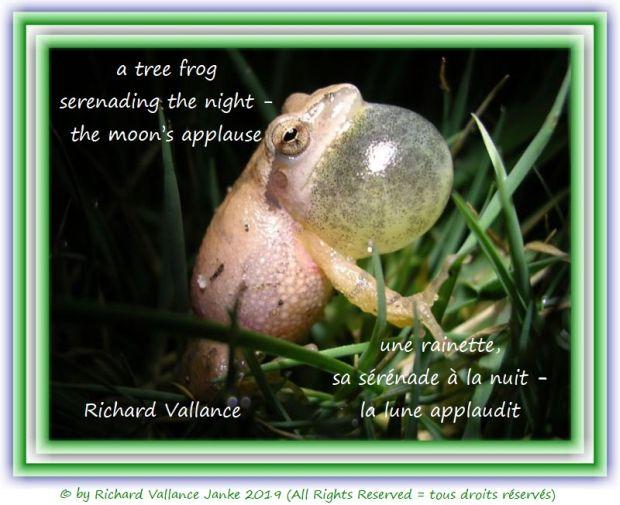 tree frog 620