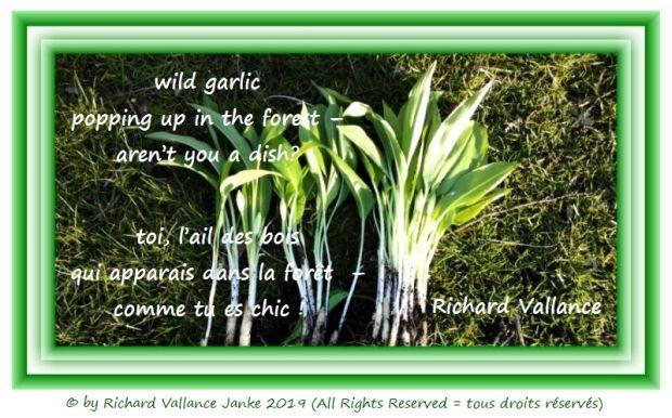 wild garlic 620
