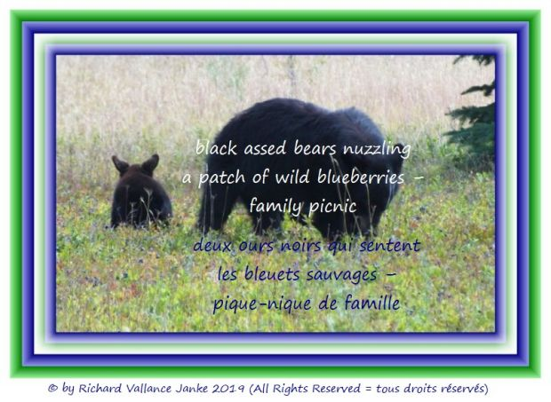 bears and blueberries 620