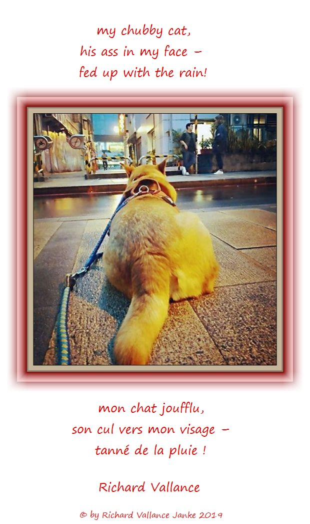 fat cat on a leash