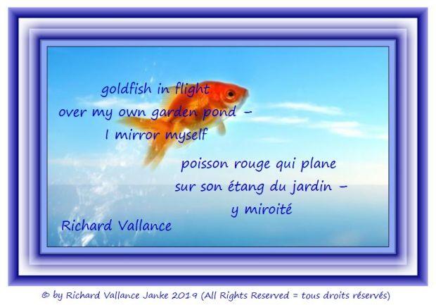 flying goldfish 620