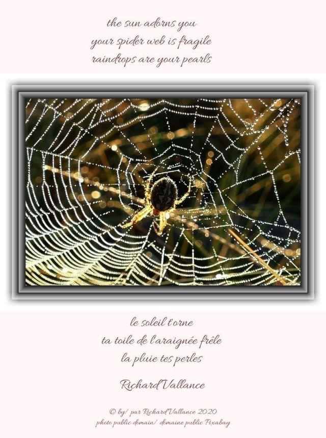 spider web rain620